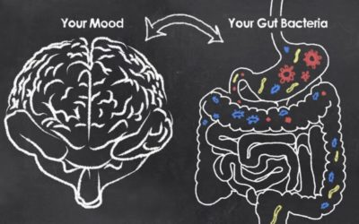 CONNECTION BETWEEN GUT HEALTH, MOOD AND EMOTIONS